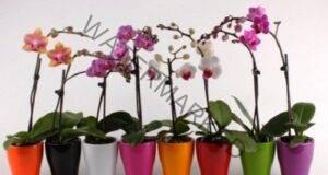 Засаждане на орхидея: Няколко тайни, които ще ви бъдат от полза!