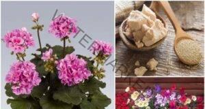 Подхранване на цветята в домашни условия: Лесно и ефективно!