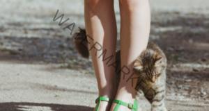 Ето защо да не гоните котка, ако се гали в краката ви