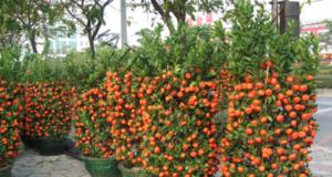 Ето как можете да отглеждате мандарини сами вкъщи
