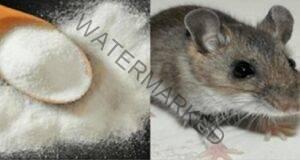 Изгонете мишките от дома си с тази ефективна смес!