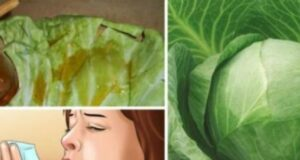 Излекувайте кашлицата и бронхита с помощта на зелев лист и мед!