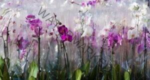 Как да изберете здрава орхидея в магазина? Практични съвети