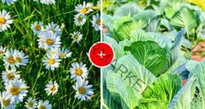 Партньори в градината: растенията, които си съжителстват идеално