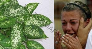 Растенията в дома ви могат да бъдат опасни! Бъдете внимателни!
