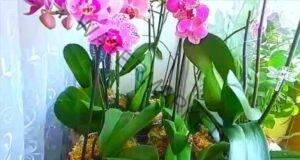 Спазвайте тези 9 правила и орхидеята ви ще цъфти целогодишно!