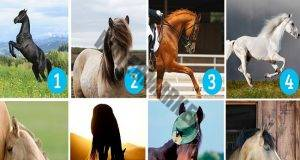 Тест на личността: Изберете кон и научете повече за себе си!
