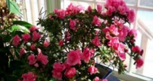 Трик, с който цветята ви ще цъфтят повече и ще издържат по-дълго