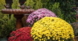 Богат цъфтеж на саксийните цветя - постигнето го с този хитър трик!