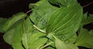 Живовляк - мощен лек и едно от най-полезните растения!