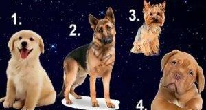 Изберете куче и ще ви разкрием кой е идеалният мъж за вас