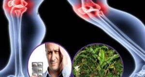 Корен, който елиминира възпалението и болката при остеоартрит