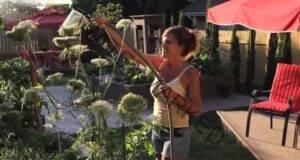 Най-доброто домашно средство за борба с вредителите в градината