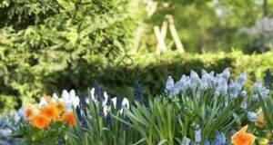 15 идеи как да създадете градината на мечтите си!
