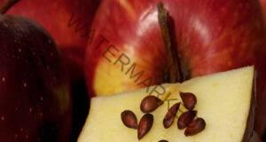4 вида семена с голяма антиканцерогенна сила