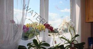 Ето защо веднага се отървах от орхидеята у дома