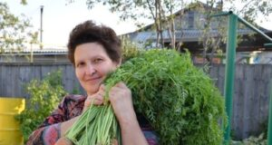 Ето как да засадите морковите за добра реколта!
