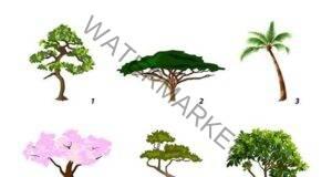 Изберете дърво и разберете коя е основната черта на характера ви!