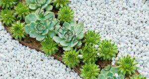 Красота със собствени ръце - композиции от сукуленти за градината