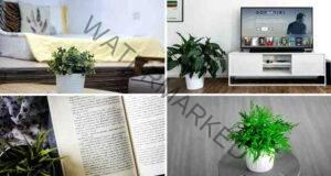 Стайните растения, които са изключително полезни за здравето