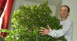 Съвети за правилно оформяне на Дървото на парите