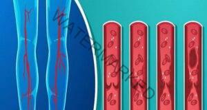 7 продукта, които кардиолозите препоръчват да консумирате