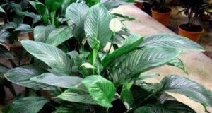 Ако имате едно от тези 11 растения, то вие имате истинско съкровище