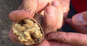 Всички хвърлят тази част на ореха, а тя лекува сърдечни заболявания