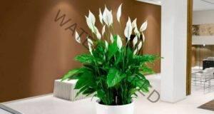 Стайни растения, които носят късмет и щастие в дома