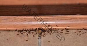 Струва стотинки, а ще ви помогне да се избавите от мравките