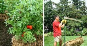 Бали от слама за невероятна градина - научете в тази статия!