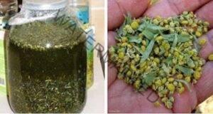Ефективен метод срещу паразити и цялостно очистване на организма