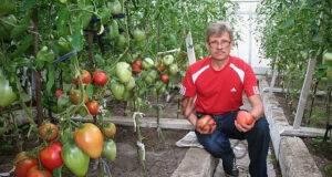 За здрави домати и краставици използвайте разтвор от мая