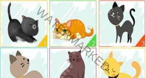 Избраната от вас котка разкрива много за вашата личност
