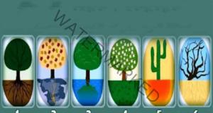 Какъв човек сте? Изберете корените на едно от тези дървета!