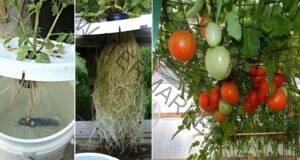Хидропоника - лесен и ефикасен метод за вашите растения!