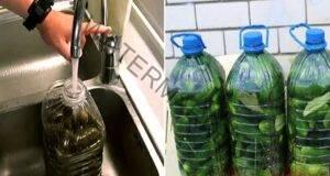 Хрупкави краставички: Не е нужно да ги варите и стерилизирате