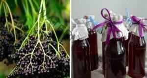 Черен бъз: Лечебно растение за женско здраве!