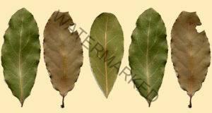 Изгонете насекомите, като поставите тези листа в дома си