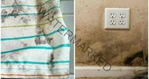 Как да се избавите от мухъла у дома? Няколко ценни съвети