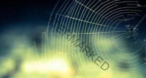 Къщата ви е пълна с паяци? Ето как да се отървете от тях