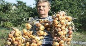 Ето как лукът ще дава повече реколта всяка година!