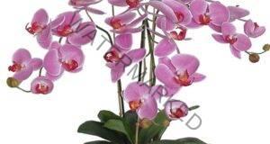 """Ето няколко съвета как да """"накарате"""" орхидеята да цъфти"""