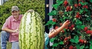 Хитринки за богата реколта от лук, чесън и много други