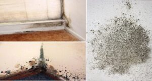 3 начина да убиете мухъла у дома без химикали