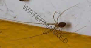 Паяци у дома? Никога не ги убивайте! Ето причината!