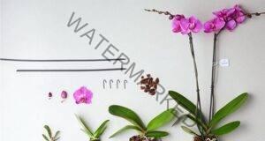 За да цъфти орхидеята през цялата година, спазвайте тези правила!