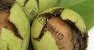 Орехите понижават холестерола за 4 часа: Рецепта