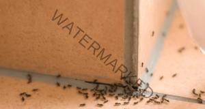 Отървете се от мравките във вашия дом бързо и лесно