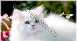 Разберете защо трябва да имате котка в дома си!